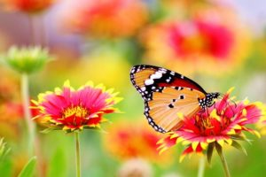 This is an image of flowers and a butterfly. Do you need help re-addressing the balance of your life, then you need my help to handle any anxiety and stress. Epsom based counsellor offers counselling and hypnotherapy.